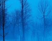 Winter Wonderland Tree Scene Eerie 5x7 Photography Print Blue