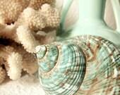 Aqua Shell 5x7 Print