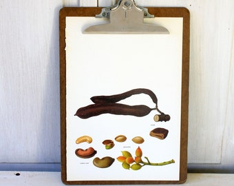 Vintage Book Page - Vintage Illustrations - 1969 - Pistachio, Carob, Cashew Nut - For Framing, Decoupage, Mixed Media, Assemblage, Collage
