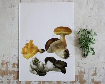 Vintage Print  - Mushroom  - Book Plate  - 1965 - Unframed Bookplate - Gallery Wall - Oyster Mushroom - Girolle - Boletus