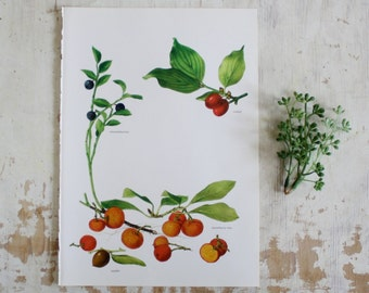 Vintage Print  - Jujube, Whortleberry, Strawberry Tree - Book Plate  - 1965
