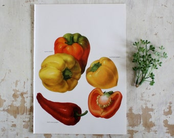 Vintage Print  - Peppers - Book Plate  - 1965