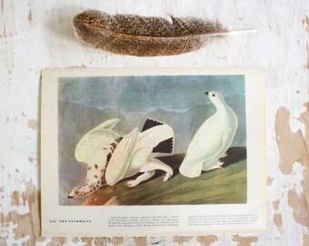 Ptarmigan - Vintage Bird Plate - 1967