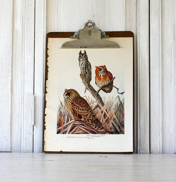Owls - Antique Book Plate - 1914