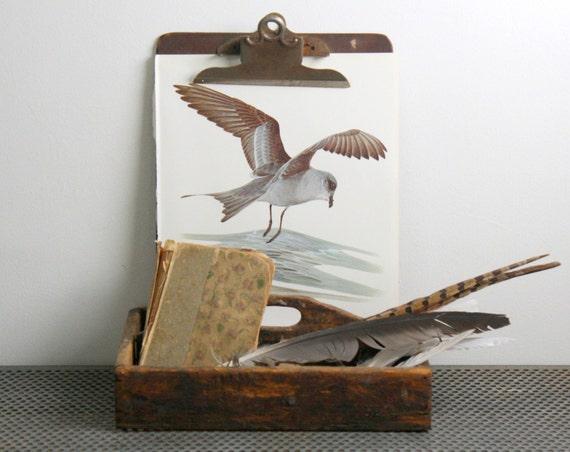 Storm Petrel  - Vintage Bird Plate - 1974
