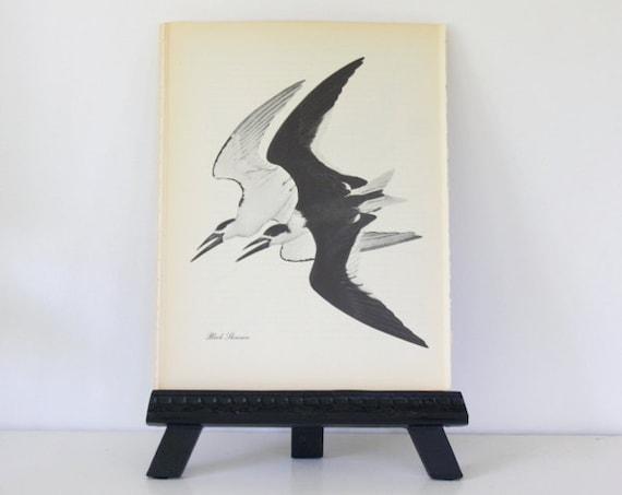 Black Skimmer  - Vintage Book Page - 1974