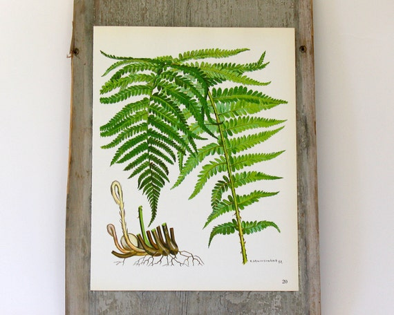 Vintage Flower Plate - Fern  - Botanical Illustration