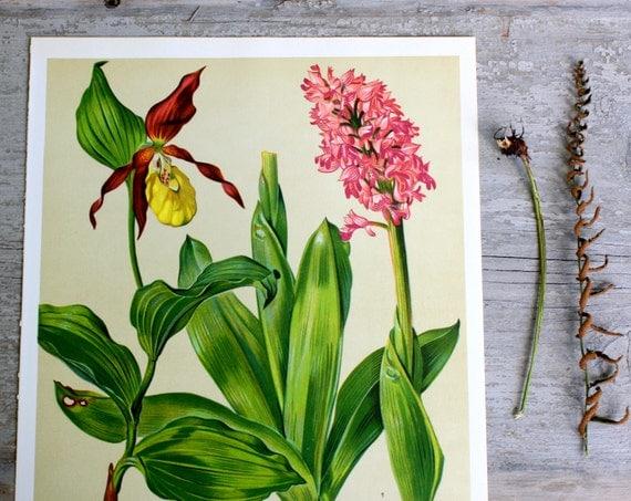Vintage Flower Plate  - Botanical Illustration 1968