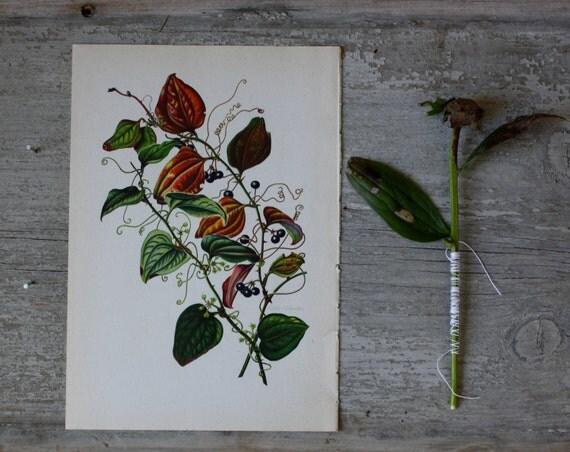 Botanical Shrub Print