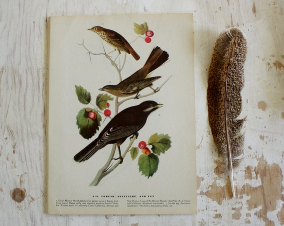 Thrush, Solitaire and Jay - Vintage Bird Plate - 1967