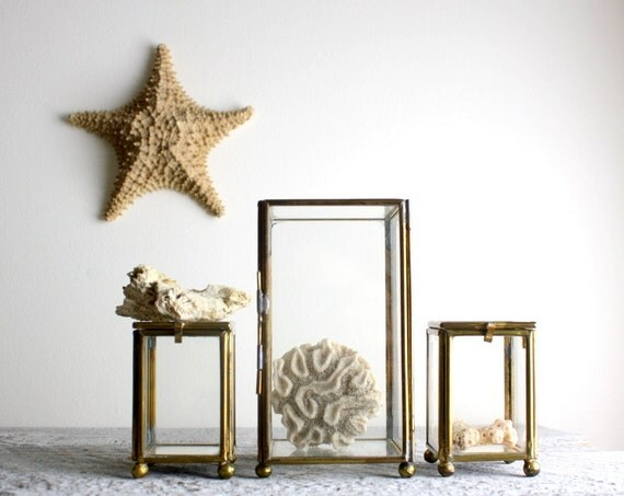 Little Vintage Brass and Glass Display Cases - Set of Three - Terrariums