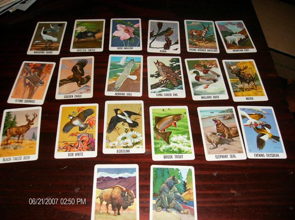 Wildlife Federation Christmas Cards