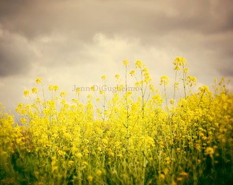 Golden yellow nature fine art photography, grey, yellow, spring season