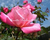 Roses Are.... - 5 x 7 Photography Print - 50 percent off