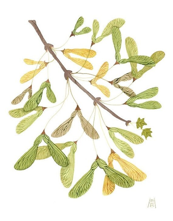 Seeds from the Maples VII original watercolor painting