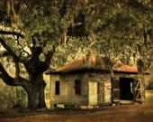 Old Tree Shack - Signed Fine Art Photograph