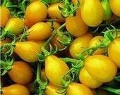 25 Heirloom Mini Yellow Pear Tomato Seeds