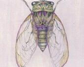 Cicada ACEO Print