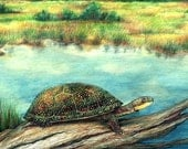 Blandings Turtle Print ACEO Size