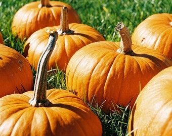 Warm Pumpkin Fragrance Oil Low Shipping
