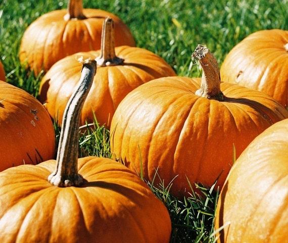 Warm Pumpkin Fragrance Oil Low Shipping
