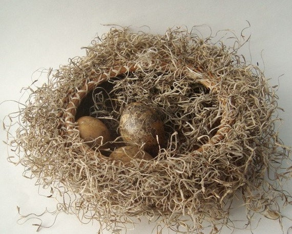 Moss and Pine Needle Basket with Spanish Moss Snake Hiding Rustic Woodland Nest