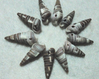 Spiral Sea Shell Beads Auger Rescued from a Vintage Necklace A6