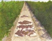 Vineyard Watercolor Painting - Fresno Raisin Harvest  grapevines grape trays Original Watercolor Fresno Raisins