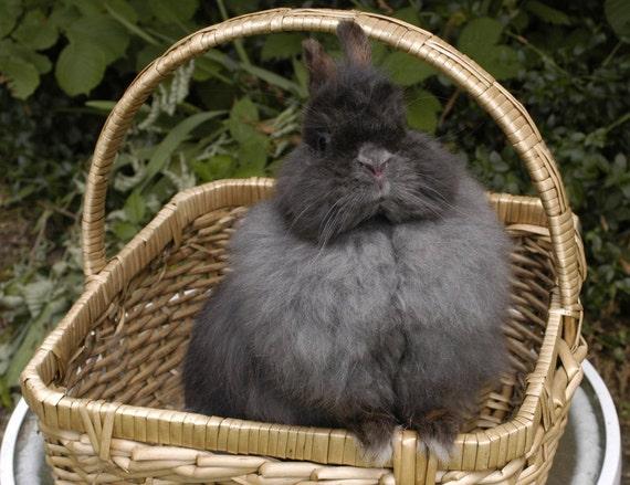 Blue Rabbit Fiber Jersey Wooly Blend Spin Felt By