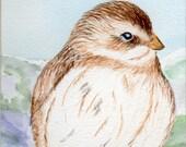 Winter Fluff Original Watercolor Painting