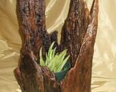 Driftwood Plant Pot