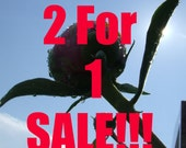2 FOR 1 SALE - Any 2 photos in my shop - 5x7 photography prints