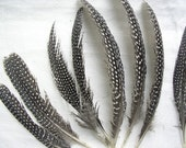 Guinea Fowl Feathers - Pack of 10 - INTERNATIONAL SHIPPING