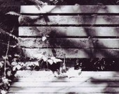 Black and White Film Bench Taken Back by Nature