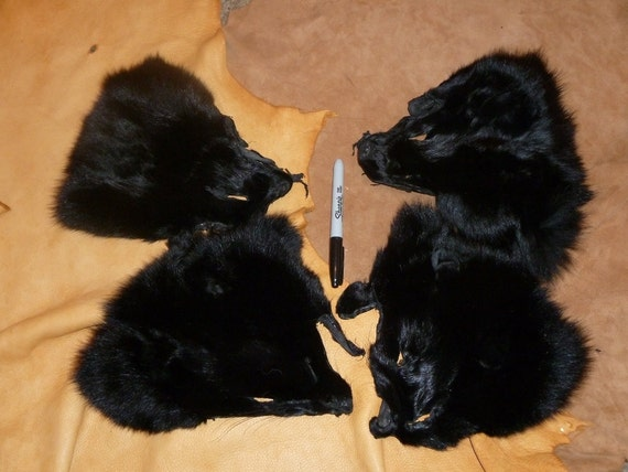 Lot of four large black dyed Arctic fox fur faces for craft, fly tying or display DESTASH