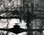 Black & White Nature Photography Print Abstract Reflections Tree Lake Swamp Fine Art Matte 8x10