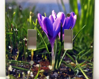 Signs of Spring -- Recycled Double Light Switch Plate Cover, Crocus, Purple, Green, Flower, Sunlight, Garden, Seattle