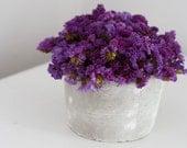 plum tuft- modern dried flower arrangement
