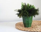 pine & fern