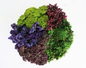 plum garden centerpiece-  as seen in reader's digest- modern dried flower arrangement