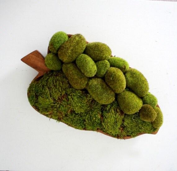 moss comfort garden