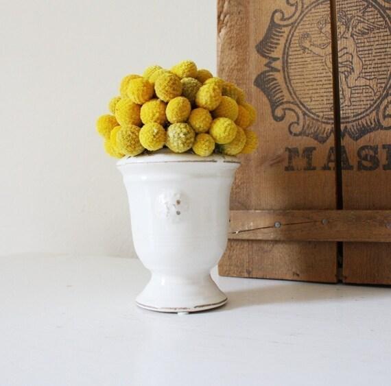 petite craspedia topiary
