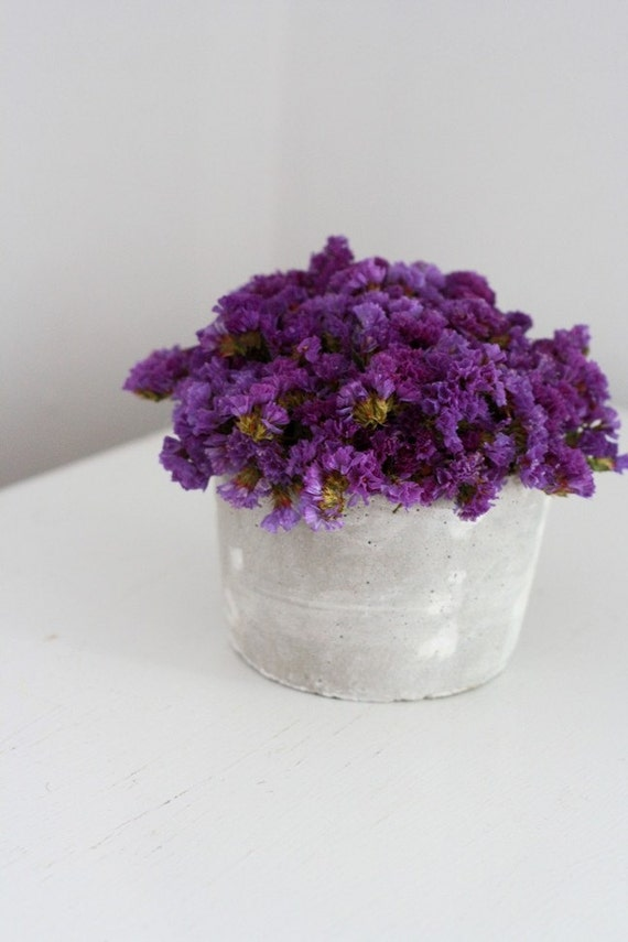plum tuft- modern dried flower arrangement