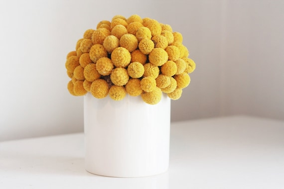 craspedia cluster in white- dried flower arrangement billy button, billy ball design.