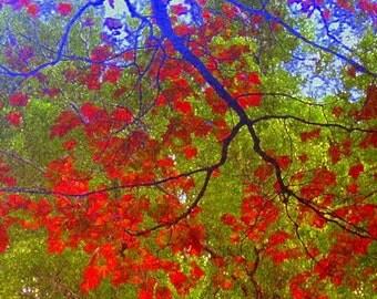Black Friday/CYBER MONDAY ETSY (51% off) Photo Art, Seasons/Autumn Tree/Oh Tree, 8 x 8 Photo Art Print