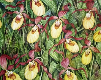 Yellow LadySlipper Field