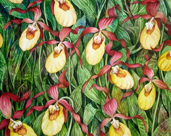 Yellow LadySlipper Field Giclee Print