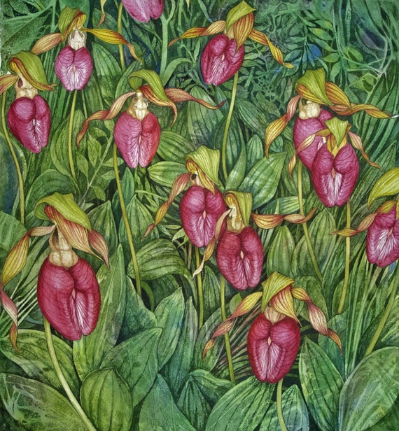 Moccasin Flower Field an original watercolor painting