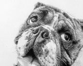 Bulldog Drawing, Bogart