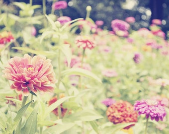 Zinnia Garden Party - 24x36 Fine Art Flower Photography Print - Feminine and Whimsical Floral Nursery or Bedroom Home Decor Photo